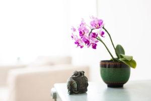 Impressionen aus der Praxis 4: Orchidee auf einer Komode